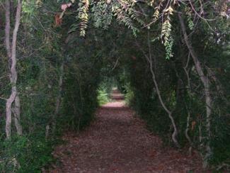 Bosque del Pazo de Fefiñáns