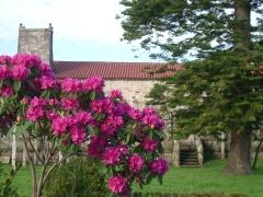 Rododendros en flor