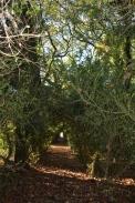 Bosque de Fefiñáns