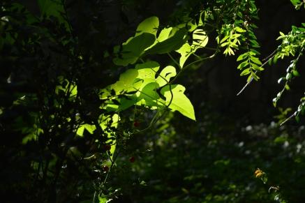 Bosque Fefiñáns